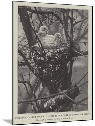 Wood-Pigeons' Nest Found on 20 April in a Tree in Torrington Square--Mounted Giclee Print