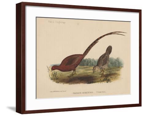 Phasianus Soemmeringh (Temminck), 1855--Framed Art Print