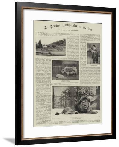 An Amateur Photographer at the Zoo--Framed Art Print