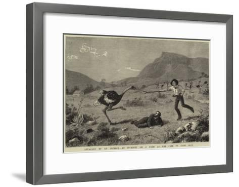 Attacked by an Ostrich, an Incident on a Farm at the Cape of Good Hope--Framed Art Print