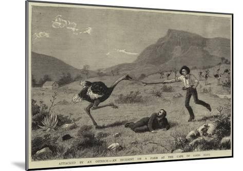 Attacked by an Ostrich, an Incident on a Farm at the Cape of Good Hope--Mounted Giclee Print