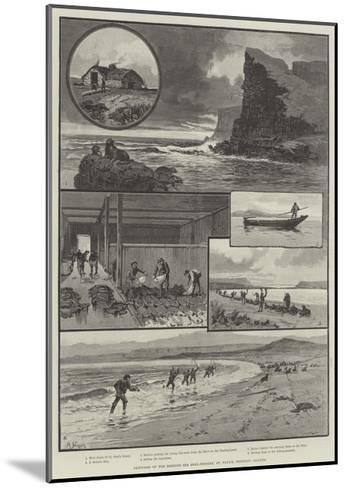 Sketches of the Behring Sea Seal-Fishery, St Paul's, Pribylov Islands--Mounted Giclee Print