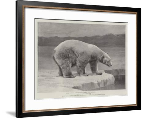 Studies from Life at the Zoological Gardens, Polar Bear on the Ice--Framed Art Print