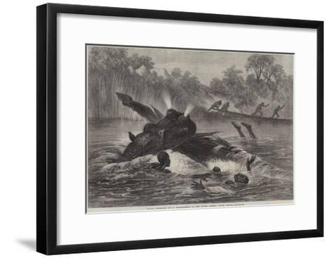 Canoe Destroyed by a Hippopotamus on the River Zambesi, South Africa--Framed Art Print