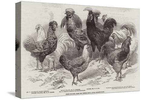 Prize Poultry, from the Winter Show, at St George'S-Road--Stretched Canvas Print
