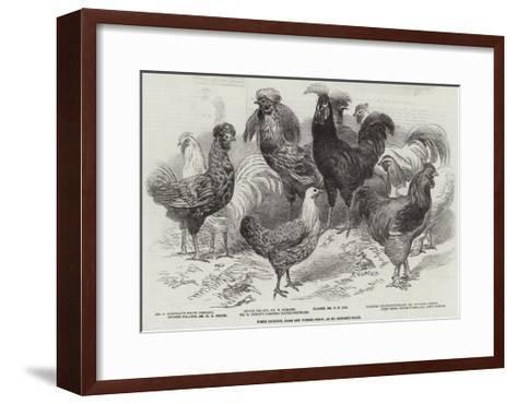 Prize Poultry, from the Winter Show, at St George'S-Road--Framed Art Print