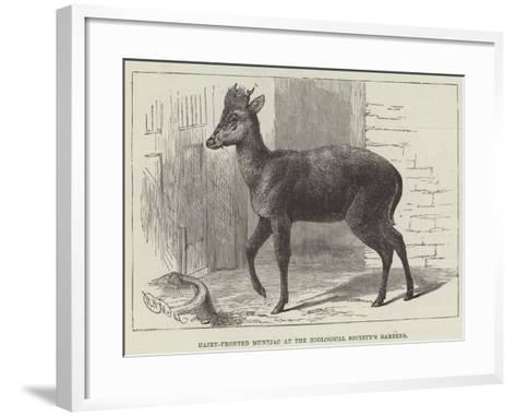 Hairy-Fronted Muntjac at the Zoological Society's Gardens--Framed Art Print