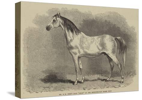 Mr W H Peek's Arab Selim at the Metropolitan Horse Show--Stretched Canvas Print