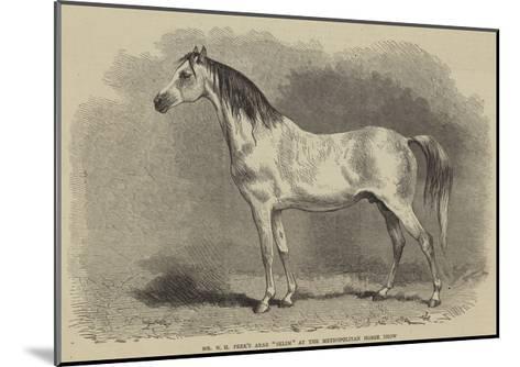 Mr W H Peek's Arab Selim at the Metropolitan Horse Show--Mounted Giclee Print
