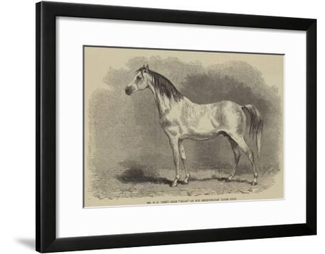 Mr W H Peek's Arab Selim at the Metropolitan Horse Show--Framed Art Print