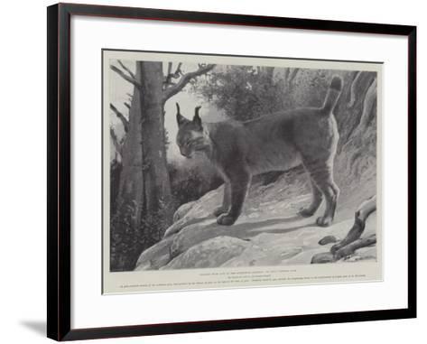 Studies from Life at the Zoological Gardens, Tibetan Lynx--Framed Art Print