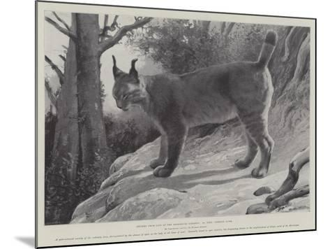 Studies from Life at the Zoological Gardens, Tibetan Lynx--Mounted Giclee Print