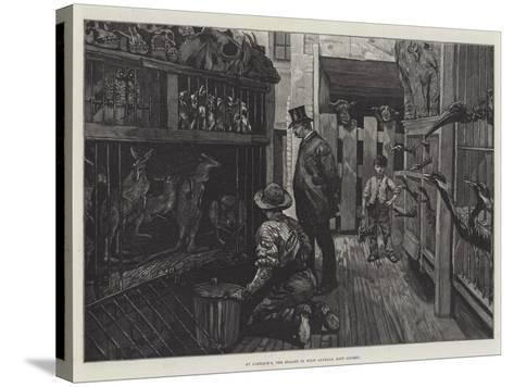 At Jamrach'S, the Dealer in Wild Animals, East London--Stretched Canvas Print