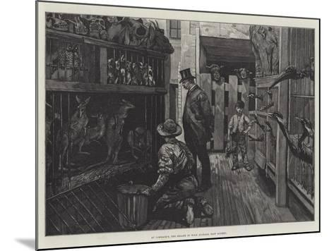 At Jamrach'S, the Dealer in Wild Animals, East London--Mounted Giclee Print