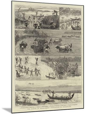 The Famine in India, Paddy Cultivation in Travancore--Mounted Giclee Print