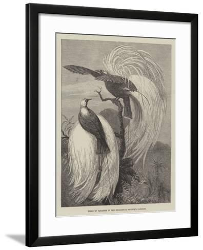 Birds of Paradise in the Zoological Society's Gardens--Framed Art Print