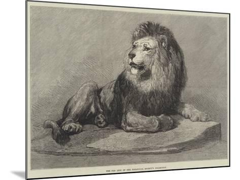 The Old Lion of the Zoological Society's Collection--Mounted Giclee Print