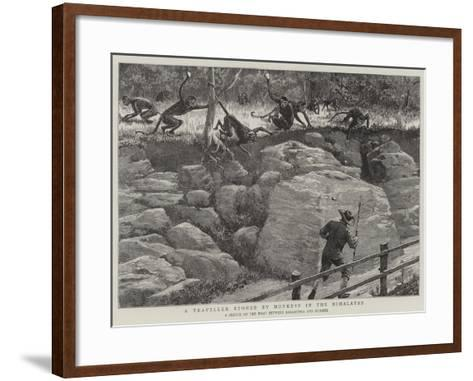 A Traveller Stoned by Monkeys in the Himalayas--Framed Art Print