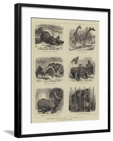 Zoological Eccentricities at the Regent's Park--Framed Art Print