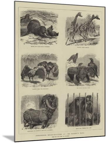 Zoological Eccentricities at the Regent's Park--Mounted Giclee Print