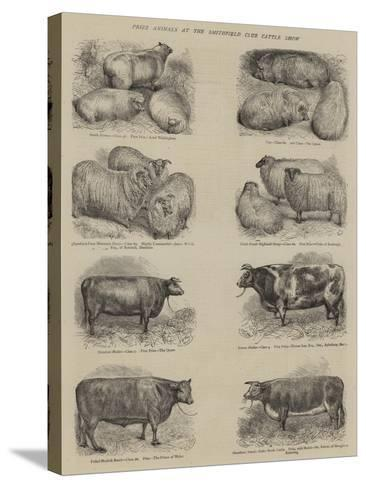 Prize Animals at the Smithfield Club Cattle Show--Stretched Canvas Print