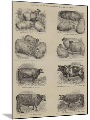 Prize Animals at the Smithfield Club Cattle Show--Mounted Giclee Print