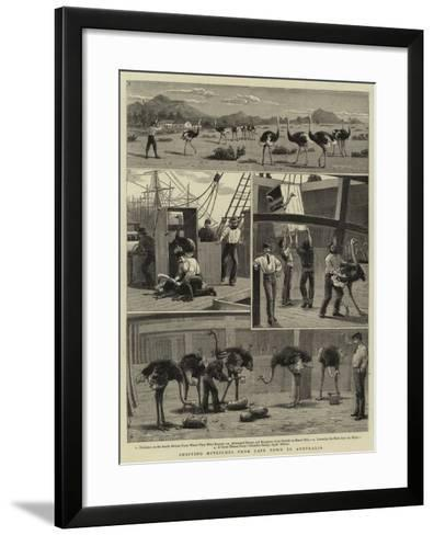 Shipping Ostriches from Cape Town to Australia--Framed Art Print