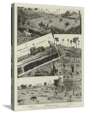 Hunting the Jackal with the Bombay Foxhounds--Stretched Canvas Print