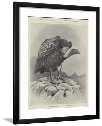 Studies from Life at the Zoological Gardens--Framed Art Print