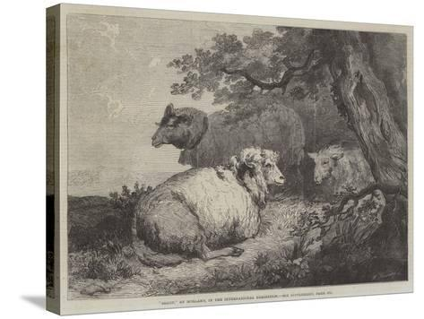 Sheep, in the International Exhibition--Stretched Canvas Print