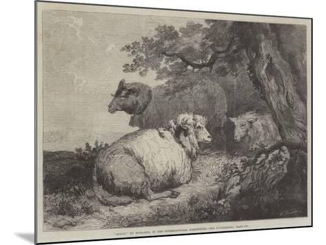 Sheep, in the International Exhibition--Mounted Giclee Print