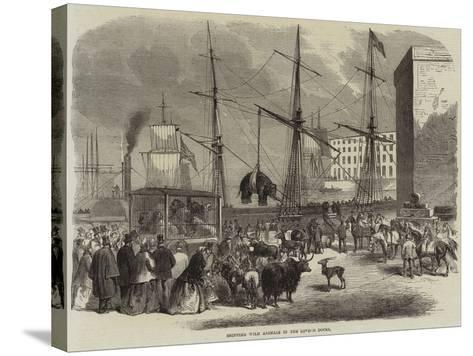 Shipping Wild Animals in the London Docks--Stretched Canvas Print