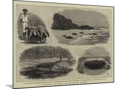 Turtle Catching at Ascension Island--Mounted Giclee Print