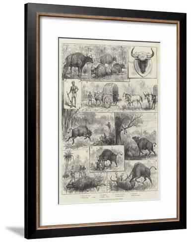 Hunting the Gaour or Indian Bison--Framed Art Print