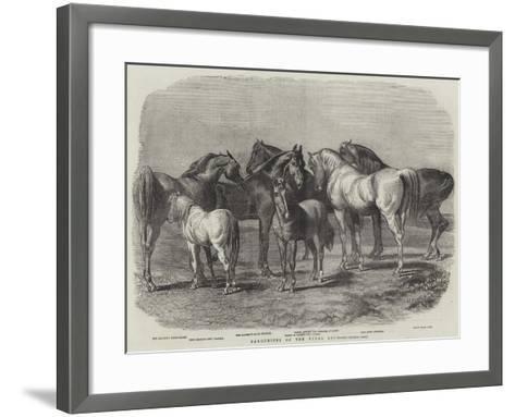 Favourites of the Royal Stud--Framed Art Print