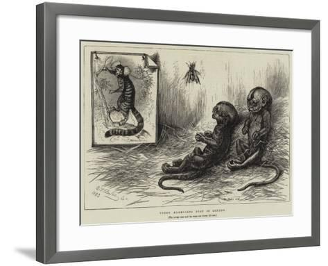 Young Marmozets Born in London--Framed Art Print