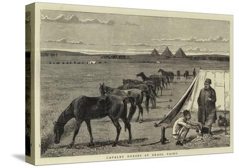 Cavalry Horses at Grass, Cairo--Stretched Canvas Print