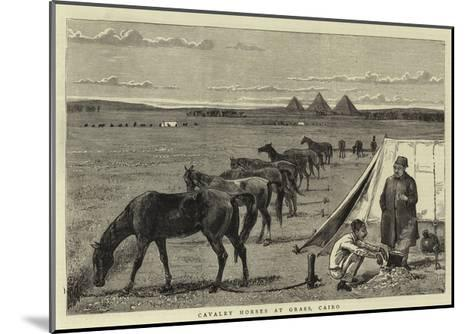 Cavalry Horses at Grass, Cairo--Mounted Giclee Print