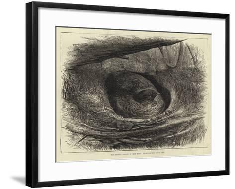 The Ruffed Grouse in Her Nest--Framed Art Print