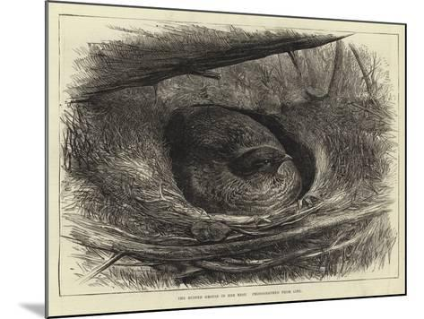 The Ruffed Grouse in Her Nest--Mounted Giclee Print