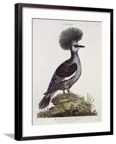Great Crested Indian Pigeon--Framed Art Print