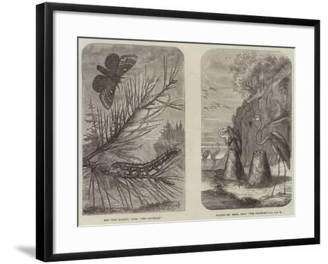 Images from the Universe--Framed Art Print