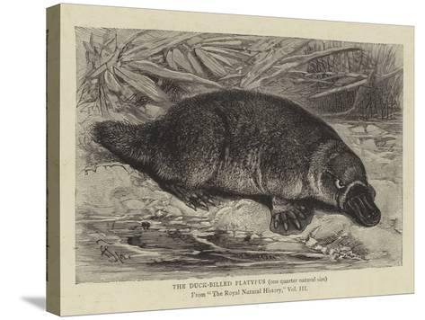 The Duck-Billed Platypus--Stretched Canvas Print