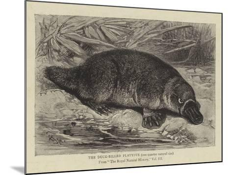 The Duck-Billed Platypus--Mounted Giclee Print