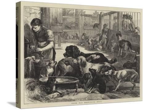 Home for Destitute Dogs--Stretched Canvas Print