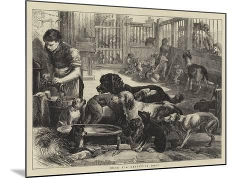 Home for Destitute Dogs--Mounted Giclee Print