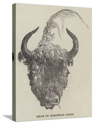 Head of European Bison--Stretched Canvas Print