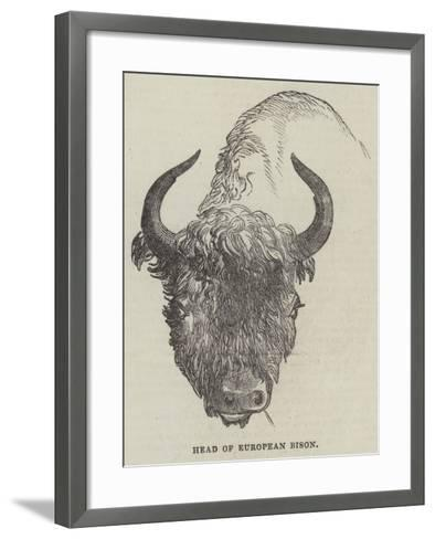 Head of European Bison--Framed Art Print