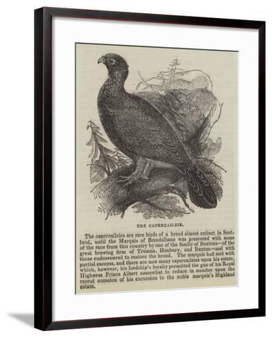 The Capercailzie--Framed Art Print