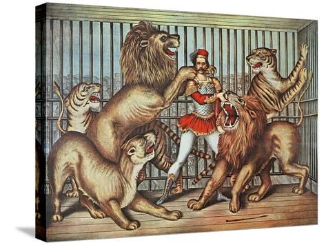 Lion Tamer, C.1880--Stretched Canvas Print